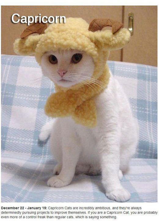 Kucing Lucu Berlambang 12 Zodiak Tisya Audrey Diary